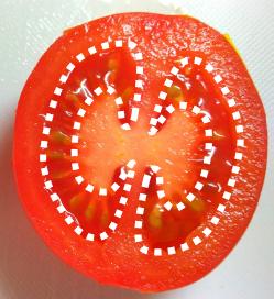 写真:正常なトマトの断面(白点線:ゼリー状部分)