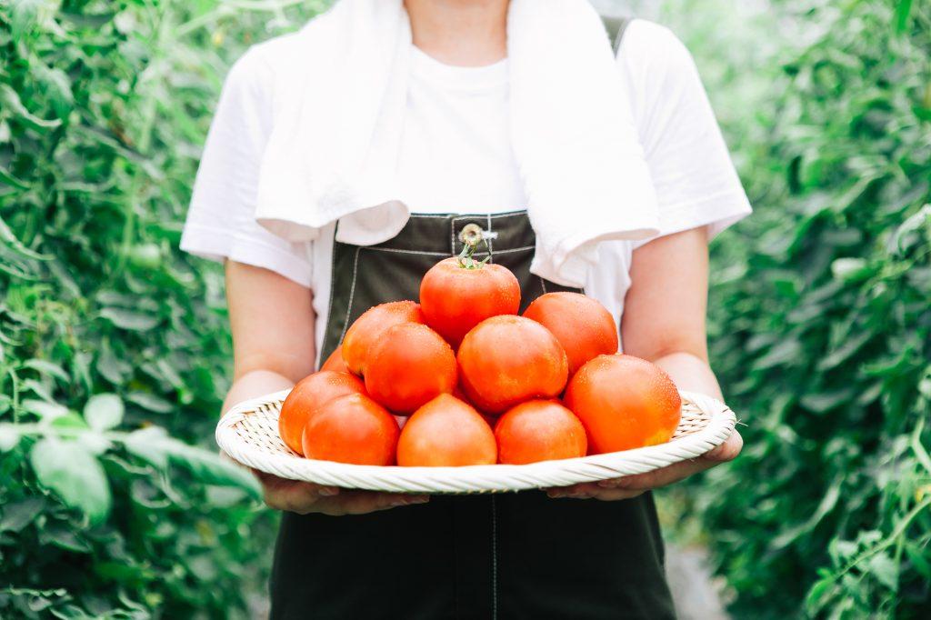 収穫量増加が期待できる「トマトトーン」のご紹介