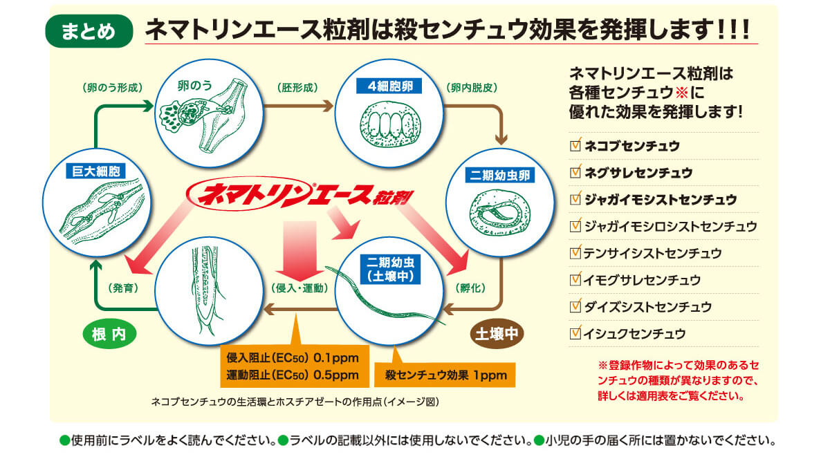 ネマトリンエース粒剤は殺センチュウ効果を発揮します!
