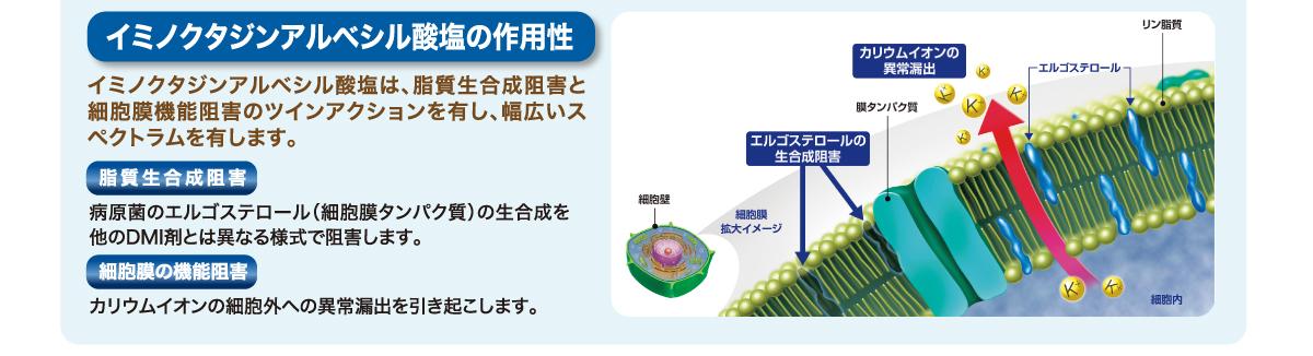 イミノクタジンアルベシル酸塩の作用性
