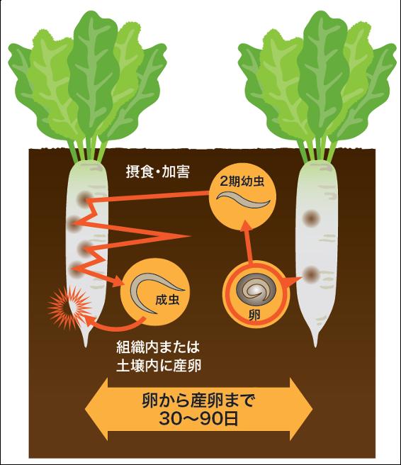 加害様式のイメージ図