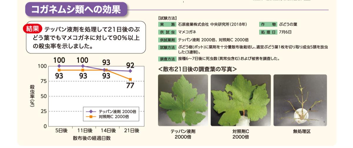 テッパン液剤を処理して21日後のぶどう葉でもマメコガネに対して90%以上の殺虫率を示しました。