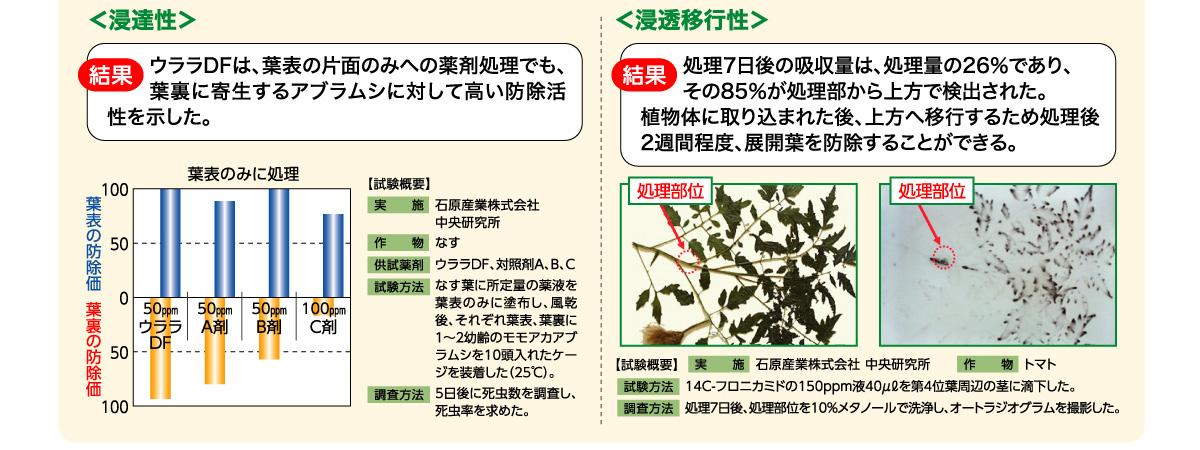 ウララDFは、葉表の片面のみへの薬剤処理でも、葉裏に寄生するアブラムシに対して高い防除活性を示した。
